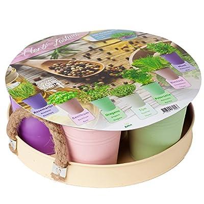 geschenkartikel-shopping 15020 Kräutergarten Set mit 7 Samensorten in Zink-Eimerchen mit Tablett von geschenkartikel-shopping auf Du und dein Garten