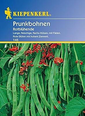 Bohne Rotblühende / Feuerbohnen von Kiepenkerl - Du und dein Garten