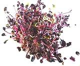 BIO Keimsprossen Radies Rambo purpurviolett 250 g Samen für die Sprossenzucht Mikrogrün Grünkraut