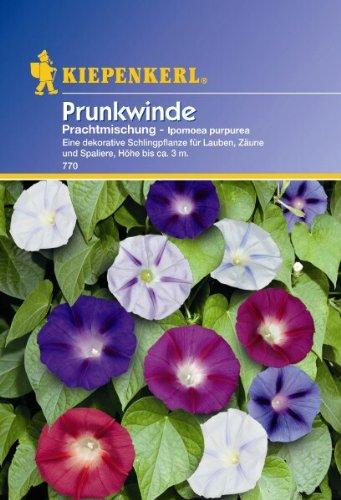 Produkt-Bild: Ipomoea purpurea Prunkwinde Prachtmischung