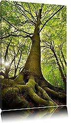 Riesiger Baum im Dschungel Format: 100x70 auf Leinwand, XXL riesige Bilder fertig gerahmt mit Keilrahmen, Kunstdruck auf Wandbild mit Rahmen, günstiger als Gemälde oder Ölbild, kein Poster oder Plakat