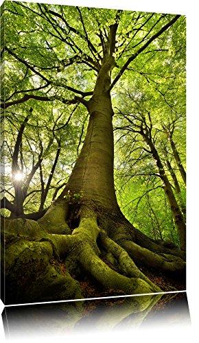 Riesiger Baum im Dschungel Format: 100x70 auf Leinwand, XXL riesige Bilder fertig gerahmt mit...