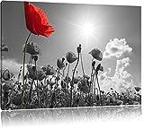 wunderschönes Mohnblumenfeld im Sommer schwarz/weiß Format: 60x40 auf Leinwand, XXL riesige Bilder fertig gerahmt mit Keilrahmen, Kunstdruck auf Wandbild mit Rahmen, günstiger als Gemälde oder Ölbild, kein Poster oder Plakat