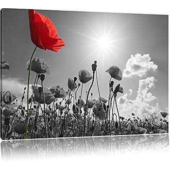 Amazon.de: wunderschönes Mohnblumenfeld im Sommer schwarz/weiß ...