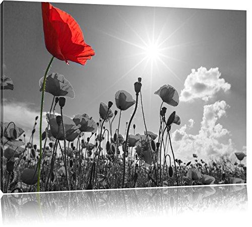 wunderschönes Mohnblumenfeld im Sommer schwarz/weiß Format: 120x80 auf Leinwand, XXL riesige Bilder fertig gerahmt mit Keilrahmen, Kunstdruck auf Wandbild mit Rahmen, günstiger als Gemälde oder Ölbild, kein Poster oder Plakat