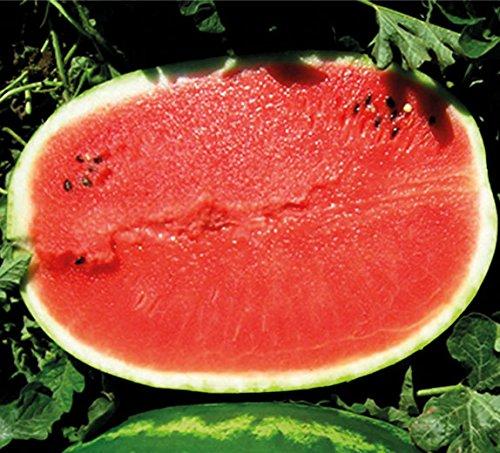 Melone - Wassermelone Calsweet - 50 Samen