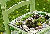 Sukkulenten/Kakteen / Samen Mix/Lithops / Zierpflanzen/ca. 200 Samen