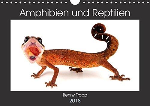Amphibien und Reptilien (Wandkalender 2018 DIN A4 quer): Amphibien und Reptilien aus aller Welt (Monatskalender, 14 Seiten ) (CALVENDO Tiere) [Kalender] [Apr 01, 2017] Trapp, Benny