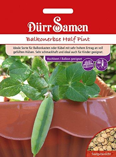 Balkonerbse Half Pint | Erbsensamen von Dürr-Samen