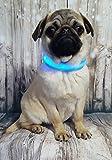 Leuchthalsband, Hundehalsband mit LED,Licht-Halsband für Hunde,3 Verschiedene Stufen, Blinkend bis Dauerhaft, mit Beleuchtung, Gr S und M, Hundezubehör von Barons Finden sie bei Uns (L)