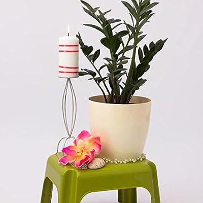 Terra 1401396100 Coubi Kunststoff Übertopf 29 cm, beige von Terra - Du und dein Garten