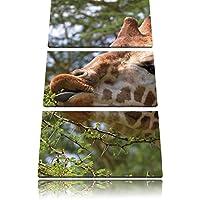 carino giraffa mentre si mangia immagine Canvas 3 PC 120x80 immagine sulla tela, XXL enormi immagini completamente Pagina con la barella, stampe d'arte sul murale cornice gänstiger come la pittura o un dipinto ad olio, non un manifesto o un baner