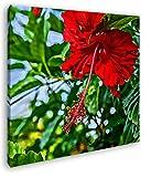 deyoli schöner Roter Hibiskus Format: 60x60 Effekt: Zeichnung als Leinwandbild, Motiv auf Echtholzrahmen, Hochwertiger Digitaldruck mit Rahmen, Kein Poster oder Plakat
