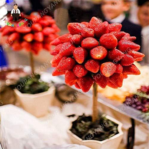Shopmeeko 300 stücke Fruchtbare erdbeerpflanzen Outdoor Strawberry Tree pflanzen Köstliche Bio obst pflanzen Hausgarten Pflanzen Hof Pla: erdbeerbaum