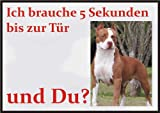 INDIGOS UG - Achtung/Fun Schild - Pitbull Türschild Türschild A5 ca. 21x15 cm 3mm PVC - Türschild für Käfig, Zwinger, Haustier, Tür, Tier, Aquarium