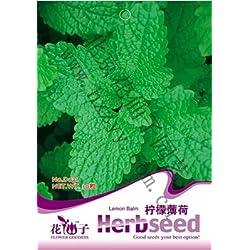 1 Beutel = 30 Stück Seltene Coulerful Ahornbaum-Samen Bonsai Garten Pflanzen in Töpfen Samen von Japanischer Ahorn