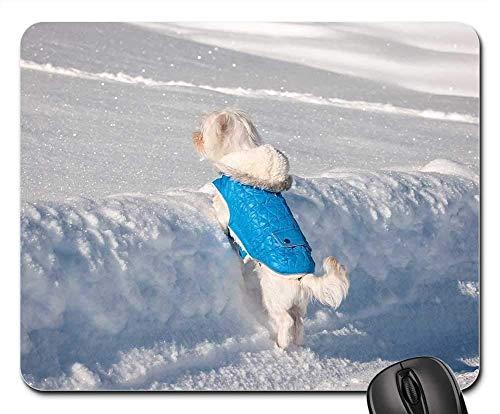 Gaming-Mauspads, Mauspad, Hund maltesischer Kleiner Hund junger Hund weiß süß süß