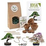 Bonsai Starter Kit vermeerderingsset incl. GRATIS eBook - plantenset van kokosnootpotten, zaden & grond - duurzaam cadeau-idee voor plantenliefhebbers (Afrikaanse blauwe regen + Australische pijnbomen)