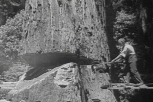 The Redwood Forest in 1940s Northern California [DVD]: Redwoods Logging Industry Promotional Film with Video of the Wood Industries & Lumber Mills Chopping Down the Giant Redwood Trees