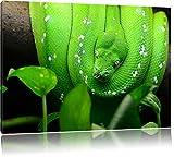 Grüne Schlange, gelbe Augen, USA 100x70cm Bild auf Leinwand, XXL riesige Bilder fertig gerahmt mit Keilrahmen. Kunstdruck auf Wandbild mit Rahmen. Günstiger als Gemälde oder Ölbild, kein Poster oder Plakat