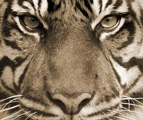 - Dschungel Tiger Nase