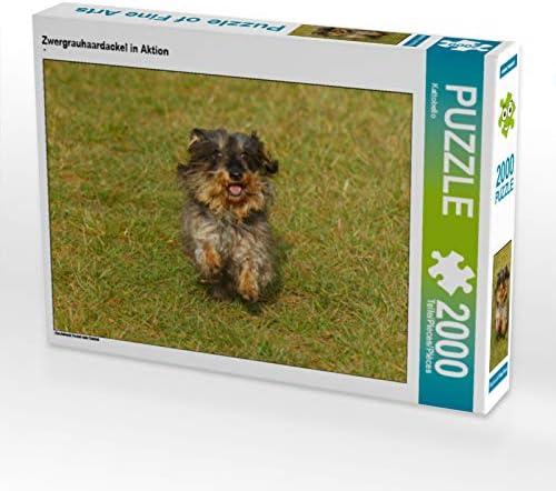 CALVENDO Puzzle Zwergrauhaardackel in Aktion Aktion Aktion 2000 Teile Lege-Grösse 90 x 67 cm Foto-Puzzle Bild Von | Faible Coût  b2abfa