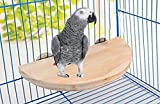#10: 8.5 Inches / 21.5 cm Natural Wood Platform cum Perch cum Stand Bird Toy Ideal for Lovebird, Budgerigar, Sun Conure, Pionus, Quaker Parrot, Cockatiel, Finch, Canary, Budgeri (Light Weight)