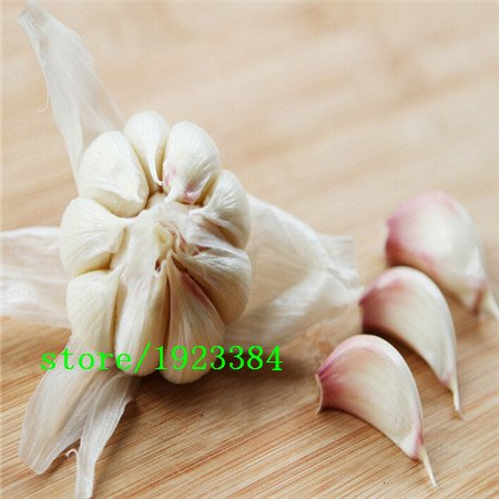 graines Stérilisation de légumes, l'ail, les graines de poireaux, environ 50 particules