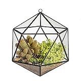 JINCAO Colgante Moderno icosaedro abierto de cristal, terrario geométrico, Maceta