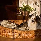 Aumüller Weidenkorb 100 cm für Hunde sind bequem und urgemütlich aus geschälten, naturbraunen Vollweiden der Hundekorb ist äußerst robust der Korb ist ein reine Naturprodukt