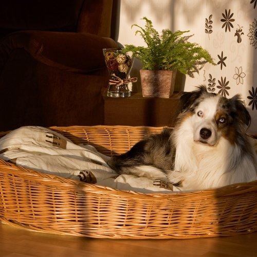Weidenkorb Hund (Weidenkorb für Hunde sind bequem und urgemütlich aus geschälten, naturbraunen Vollweiden der Hundekorb ist äußerst robust der Korb ist ein reine Naturprodukt)