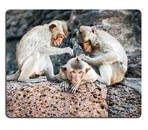 Naturkautschukmausunterlage Die Langen angebundenen Makakenaffen, die an Prang Sam Yot-Tempel Sich Entspannen, ruinieren Lopburi Thailand-Reiseziele M0A16783 - Entspannen Medizin