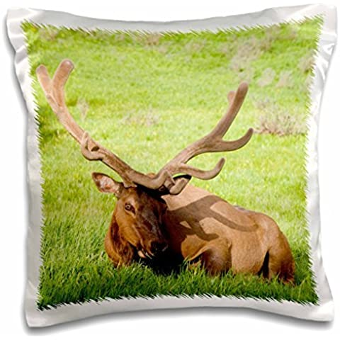 Elk - Wyoming, Yellowstone NP, Bull elk in meadow - Wild - 16x16 inch Pillow Case