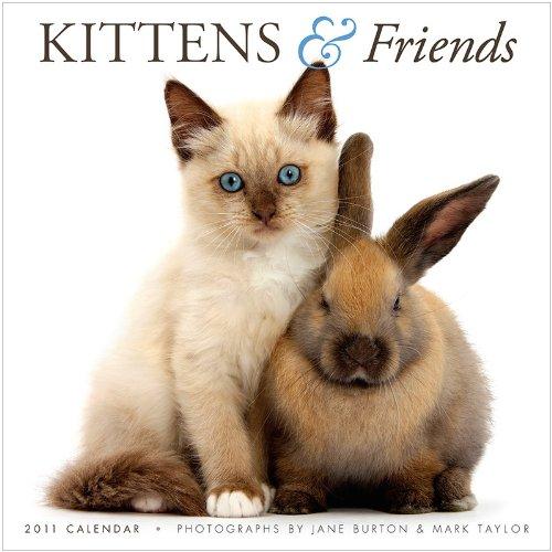 Kittens & Friends 2011 Calendar (Gladstone Kalender)
