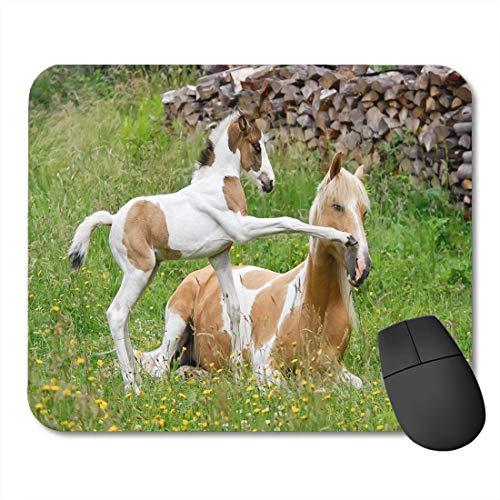 rutschfeste Gummi-Rechteck-Mausunterlagen,Pony Fohlen Tritt Seine Mutter mit Front Huf Farbe Pinto mit Tobiano Muster auch Skewbald genannt -