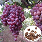 #10: Fruit Seeds Red Grape Seeds Exotic Plant Fruit Seeds Kitchen Garden Bonsai Suitable Fruit Seeds Pack By Creative Farmer