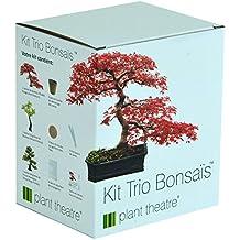 Kit Trio Bonsaïs de Plant Theatre - 3 bonsaïs distinctifs à faire pousser - Excellente idée de cadeau