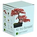 Kit Trio Bonsa�s de Plant Theatre - 3...