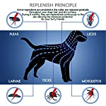 flea and tick collar for dogs, waterproof dog anti flea collar, natural & safe Flea and Tick Collar for Dogs, Waterproof Dog Anti Flea Collar, Natural & Safe 5123gpGpkWL