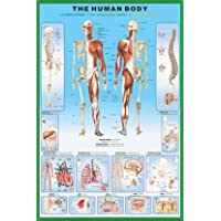 1art1® Poster The Human Body Anatomy 91 x 61 cm Ohne Rahmen