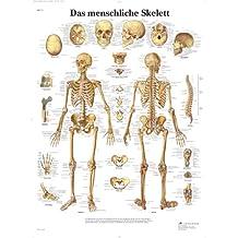 3B Scientific VR0113UU - Póster explicativo sobre el esqueleto (en alemán)