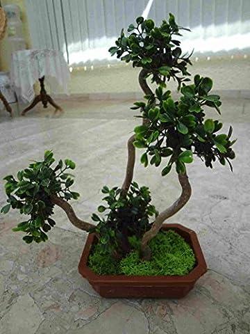 künstlicher Bonsai Bux 25-30 cm