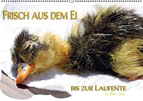 Frisch aus dem Ei bis zur Laufente (PosterbuchDIN A4 quer): Geburt eines Laufentenkükens (Posterbuch, 14 Seiten) (CALVENDO Tiere) [Taschenbuch] [Nov 19, 2012] LoRo-Artwork, k.A.