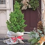 Weihnachtsbaum - 1 baum