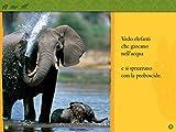 Nella-savana-Primi-passi-Ediz-illustrata