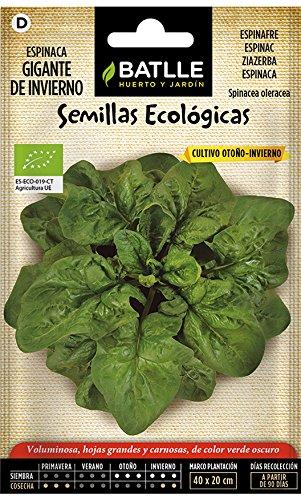 Battle - Semi Ecologici Spinaci Grandi d'inverno (220 Semi - Bio)