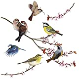 Komar - Window-Sticker BIRDS - 31 x 31 cm - Fensterdeko, Fenstersticker, Fensterfolie, Vogel, Blaumeise, Vintage - 16003 für Komar - Window-Sticker BIRDS - 31 x 31 cm - Fensterdeko, Fenstersticker, Fensterfolie, Vogel, Blaumeise, Vintage - 16003