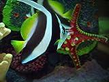 Best Carolina Aquariums - Pete Rose Scores a Tank Review