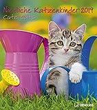 Niedliche Katzenkinder 2019- Katzenkalender, Tierkalender, Wandkalender, Posterkalender 2019 - 30 x 34 cm