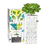 Bottlecrop - Salat aus der Flasche | Roter Blattsalat | in Flasche | Einzugsgeschenk | Anzuchtsystem | Urban Farming | Geschenkidee | Hydrokultur | Pflanzen ohne Erde| Kräuter Fentsterbank | Kräutergarten Fenster| vertikaler Garten | nachhaltig |